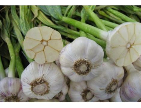 Описание сортов чеснока для выращивания
