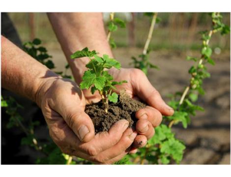 Уход за междурядьями ягодников и садов