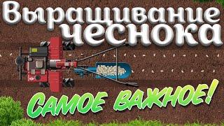 Техника для выращивания чеснока | Обобщаем информацию